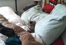 Cats go meow.