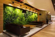 Plant at interior