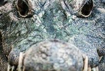 Close up on animals
