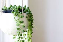 Home ideas : Indoor plants
