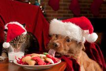Holiday Pet Advice