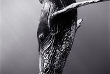 ~ PHOTOGRAPHY WildLife / Photography Nature WildLife
