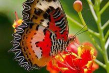 Farfalle e Coccinelle
