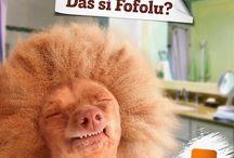 Fofola / Das si fofolu?