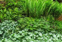Plant Combination