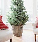 Holiday decorations / by Ashley Barnard