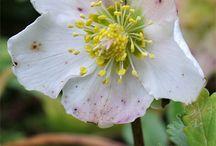 Blumen, Blüten / flowers, blossoms / Eine Verbeugung vor der Natur - an homage to nature.