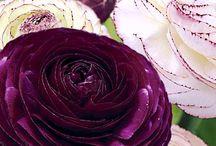 Flora world