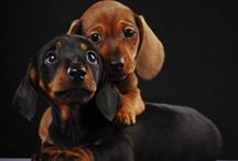 Pups / by Sarah Harelson Truxillo
