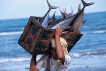 Majorwork(fish)