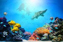 Élet a tengerek mélyén
