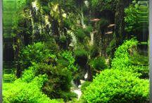 Süsswasseraquarium