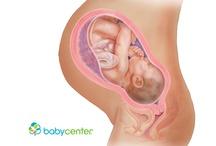 Fetal Development - Week by Week