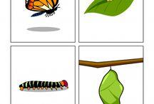 Na krídlach motýľa