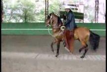 horses dancing to music
