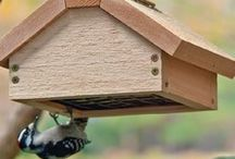Birds, Bird Houses, & Bird Feeders / by Carolyn Drost