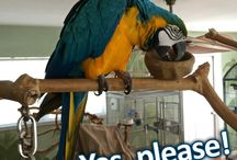 Dactyly Macaws! / Dactyls are hilarious. And they come in all kinds of colors!