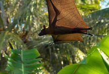 BATS / by Susan Kinney