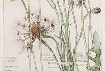 kwiaty i skrzaty