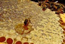 ΒΙΟΛΟΓΙΚΑ ΜΕΛΙΣΣΟΚΟΜΙΚΑ ΠΡΟΙΟΝΤΑ / Βιολογικά μελισσοκομικά προϊόντα