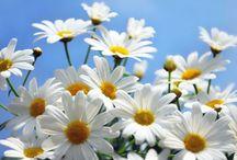 Flowers: ♡♥