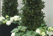 Planted shrubs