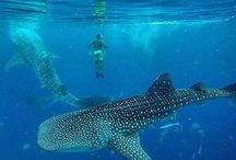 Diving in Philipinnes / Diving sites and locations in Philipinnes