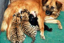 My Favorite Animals / by Isabelle Du Soleil