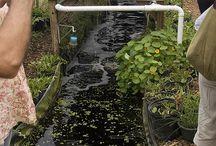 Aquaculture Inspiration