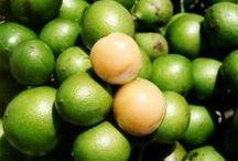 Frutas y Semillas / Regalos de la Naturaleza.