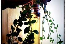 Labellum - Plants