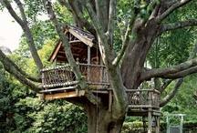 tree houses / by Sara Groff Stephens