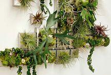 Növény falak
