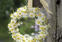 Flores e Plantas ♡ / Porque natureza é tudo!
