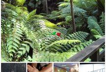 Date Ideas in Australia / Top romantic things to do in Australia