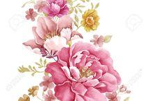 rozsa rajz