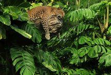 Animals ~ Big Cats / by Carroll Wilson