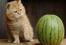 Gatos graciosos / Imágenes de gatos graciosos