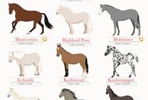 horses and animals