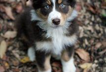 Dogs / by Bobbie Wool