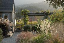 Waterwise garden designs