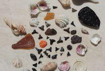 Beachcombed Treasures