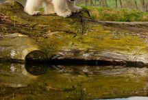 BILDER - Isbjörnar