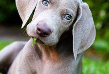 Puppy Lovin:) / by Lakin Robertson