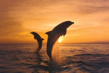 Dolphins / by Jackie Anderson