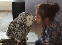 Kinder/ Tiere