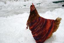 Fowl Fashion