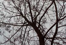 trees gab