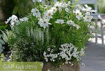 Garden and flower arrangements