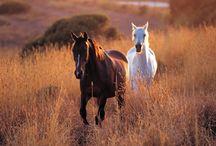 Let That Pony Run / by Carolyn Roberson